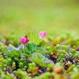 cloudberry-2955861_960_720